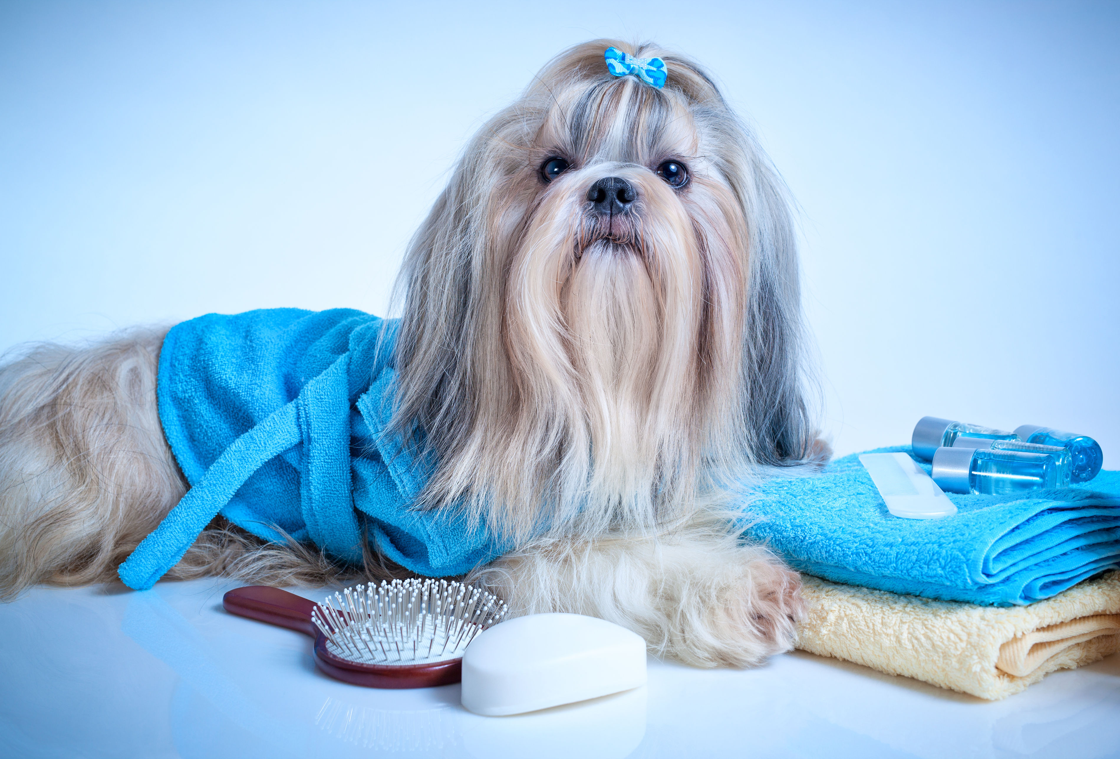 No Appointment Dog Grooming