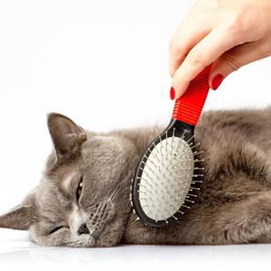 Cat Half grooming Package
