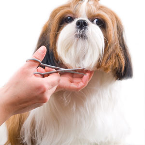 Dog Full Grooming Package