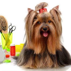 Dog Grooming Addons