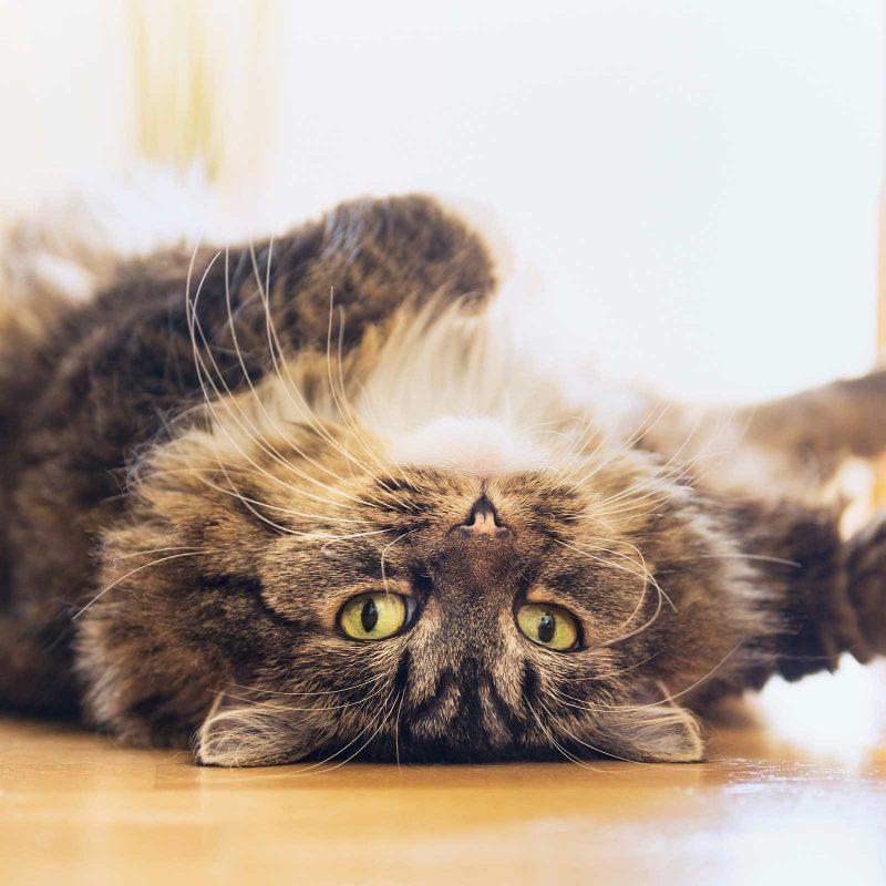 5 Strange Cat Behaviours Explained