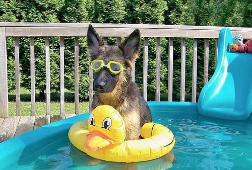How to Avoid Your Pet From Overheating During Summer