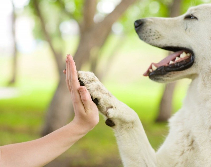 Paw Care for Dogs
