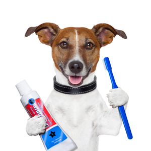 Teeth Care For Dogs – Do you or does your groomer brush the teeth of your dog regularly?
